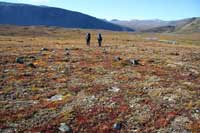 Hikers and Tundra Vegetation