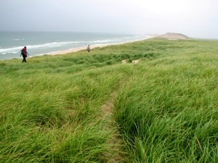Hikers on existing paths through dune grass