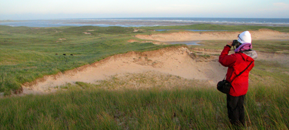 Hiker looking over Sable Island dunes