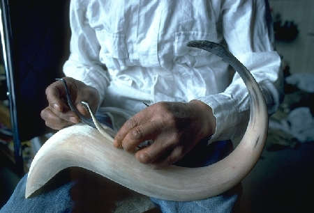 Muskox horn carving