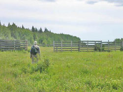 Old bison corrals at Sweetgrass