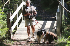 Hiker with two dogs in leash.