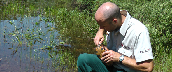 An employee of the Resource Conservation Service holding a turtle.