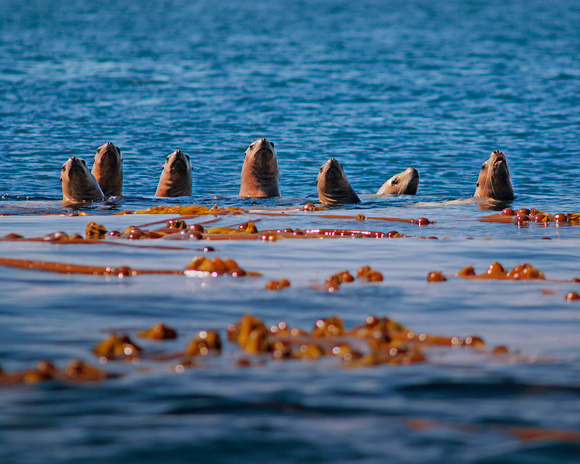 Sea lions in the only protected area in the world that extends from the depth of the ocean floor