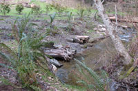 Re-graded and re-vegetated stream banks