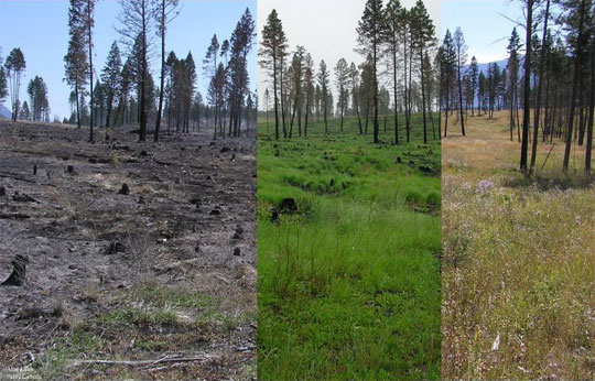 Restoration of grasslands in Kootenay National Park: 3 days, 2 weeks, and 4 months post burn