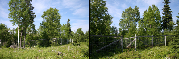 Moose exclosures