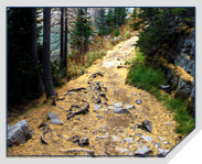 Trail covered in golden larch needles