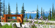 Explorez le Mont-Revelstoke avec l'application Street View de Google Maps