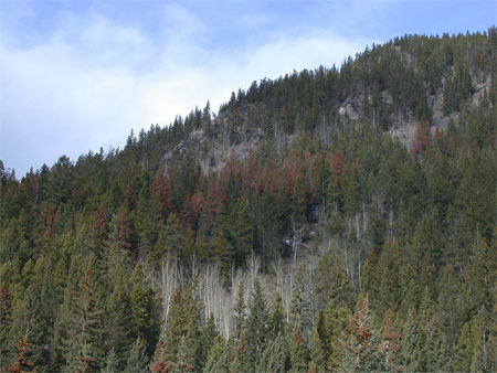 The red trees seen on the lower slopes of Stoney Squaw/Mount Norquay have been colonized by mountain pine beetle.