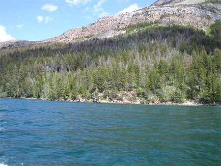 Forest changes along the East Shore of Waterton Lake after mountain pine beetle outbreak