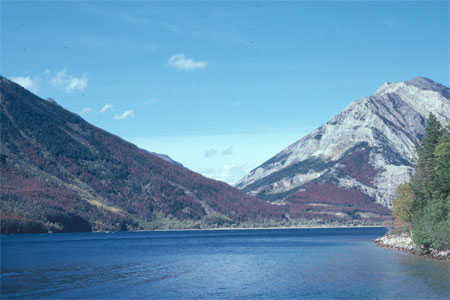 View of the slopes of Bertha Mountain above the Waterton townsite.   These are old lodgepole pine forests (last disturbance by fire was in 1855), which were highly vulnerable to the beetle.  They are very heavily impacted, especially on the lower slopes.