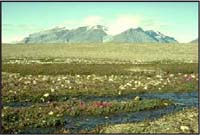 Tanquary Fiord, Ellesmere Island National Park Reserve