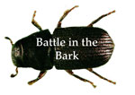 Battle in the Bark Button