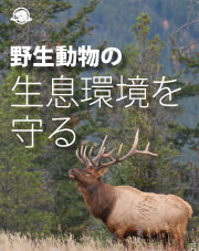Japanese - Keep the Wild in Wildlife