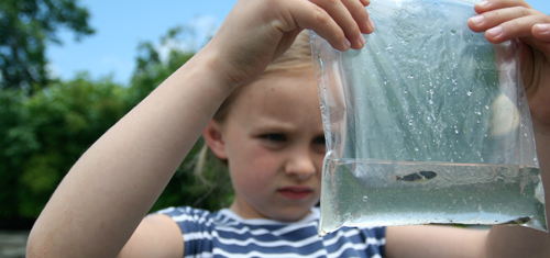 A six-year old girl looking at a small fish in a plastic bag. The fish was captured for a closer look, yet being handled with care