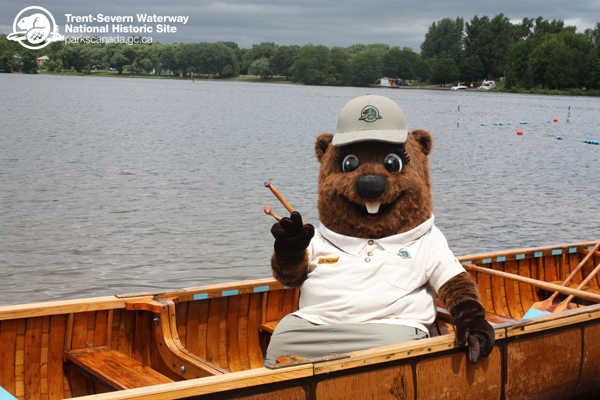Parka waves to visitors after she takes a short paddle around Little Lake on National Canoe Day. Paddling is a favourite past time of Canadians and of beavers too!