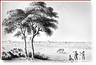 Black and white drawing. There are military constructions in background. In the foreground, there are a big tree, tree men and some cows in a large field.
