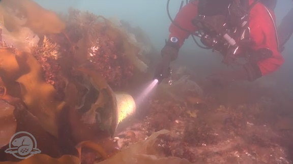 Parks Canada has unveiled the ship's bell from the recently discovered Franklin Expedition shipwreck, HMS Erebus.