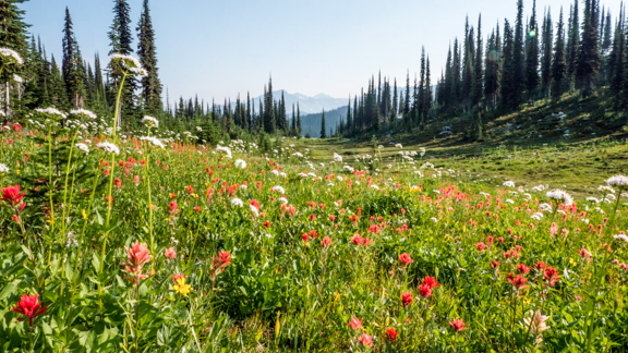 Mount Revelstoke, a family e... - Amazing Forests... Come explore Mount Revelstoke. Take your family up a mountain via the beautiful Meadows in the Sky Parkway and enjoy beautiful views and short walks along the way.