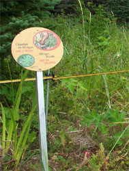 Markers surrounding a colony of Mingan thistles and humorous sign