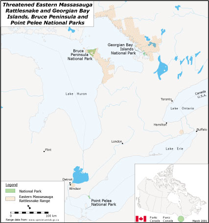 A map of massasauga rattlesnake ranges in Georgian Bay Islands, Bruce Peninsula and Point Pelee national parks.