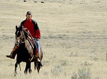 Instead of using motorized vehicles, Park staff ride horseback to conduct daily patrols to ensure the cattle have water and they stay within the grazing areas.