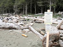 Sign denoting closed area for Pink Sand-verbena critical habitat at Clo-oose Bay