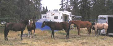 horses tied between trailers at Bighorn Campground