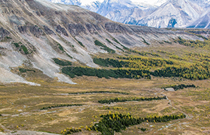 Alpine caribou habitat in Banff National Park
