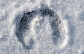 Caribou track in the snow