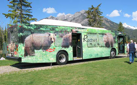 The Bear Bus