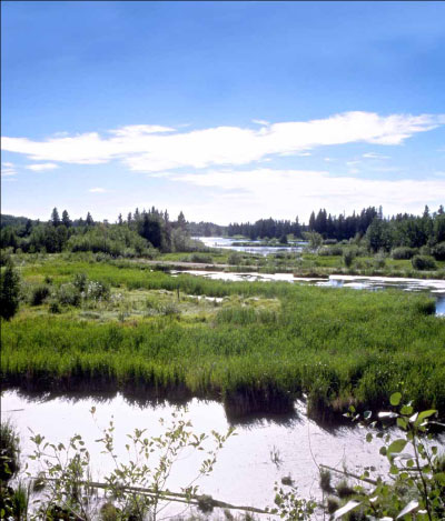 Elk Island National Park of Canada, Canada's only entirely fenced national park, Elk Island is located approximately 45 km east of Edmonton. The park, with an area of 194 km2, its neighbours, and adjacent provincial lands protect a core area of the Beaver Hills ecosystem. For some native species, this ecosystem is an important refuge from urban expansion in the Edmonton area.