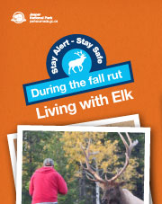 Living with Elk