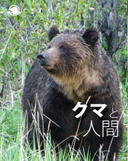 Japanese - Bears and People
