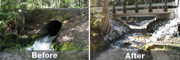 Before and after aquatic restoration at Pretty Creek