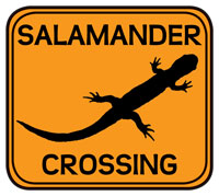 ellow 'Salamander Crossing' sign with salamander silhouette