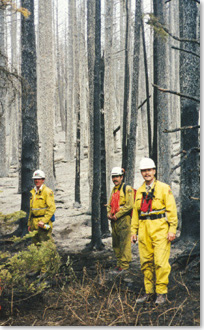 Heavily burned forest and firefighters