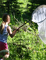 A young volunteer tries to catch Waterton's butterflies