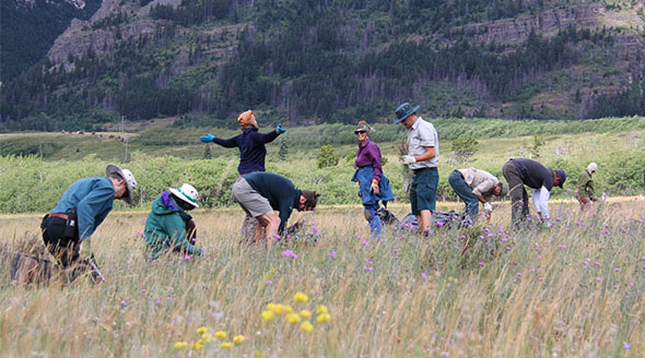 A group of volunteers at work in Waterton Lakes National Park