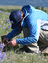 A volunteer collecting native plant seeds