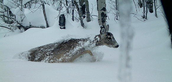 A deer in the snow