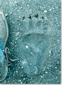An imprint of a grizzly track in mud is the same size as a hiker's boot