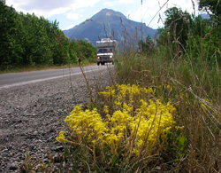 Driving into Waterton Lakes National Park