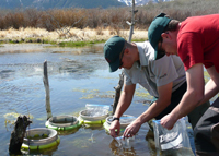 Resource technicians monitoring northern leopard frog eggs