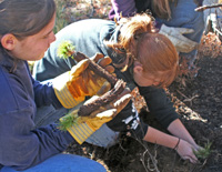 Students help plant threatened whitebark pines