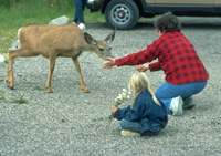 Visitors enticing deer can contribute to aggressive deer behaviour