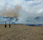 Using fire to restore grassland