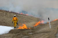 A key method used to restore prairie vegetation in the park is through prescribed fires
