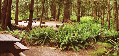Picnic benches and camping spaces at Prior centennial campground